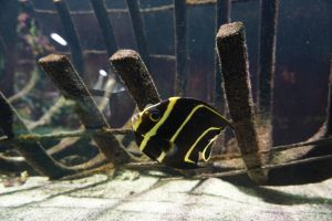 Foto di un pesce nel Muséum-Aquarium de Nancy.