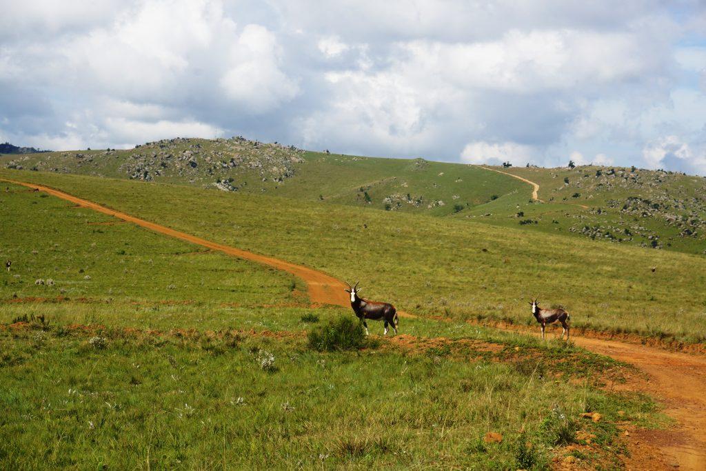 Foto di un paesaggio nel Malolotja Nature Reserve, Swaziland.