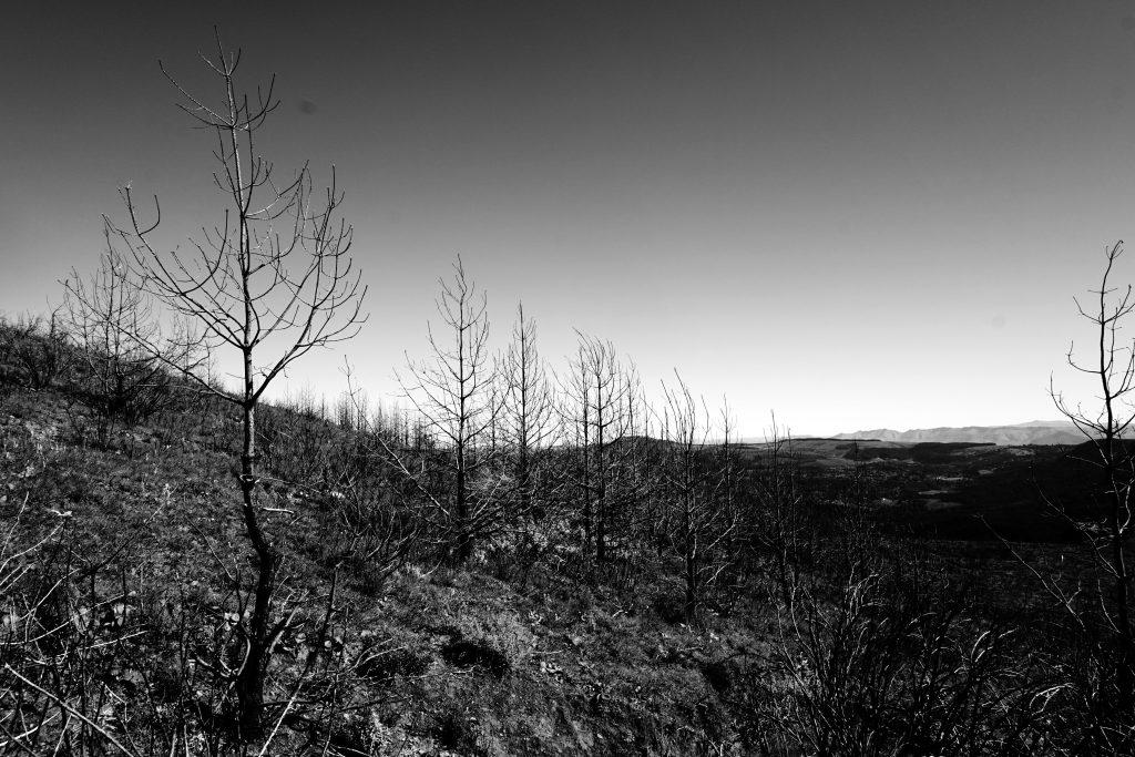 Foto del bosco di Hogsback, Sudafrica.