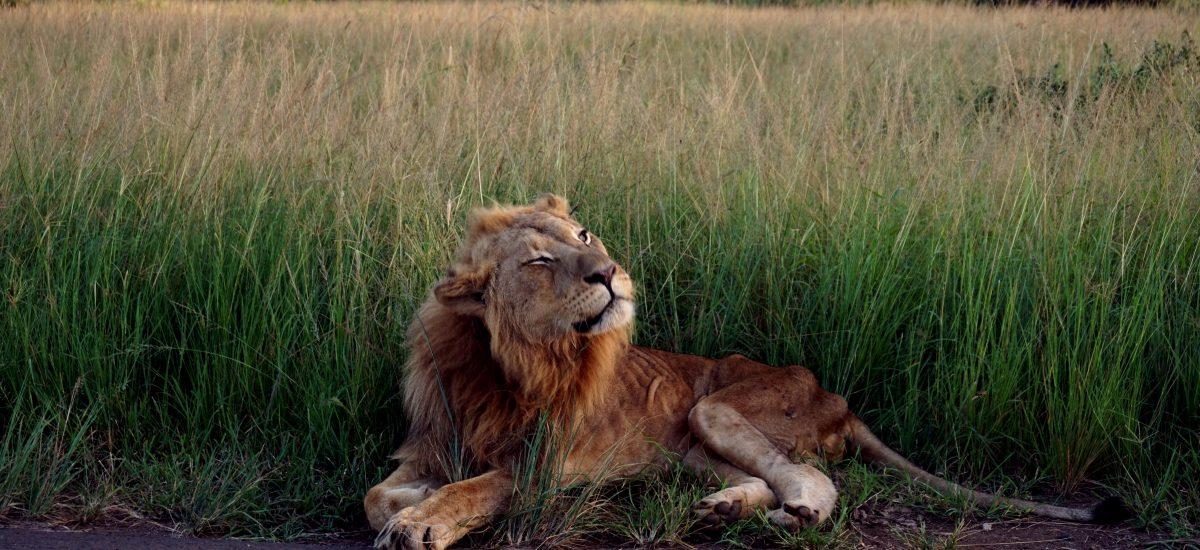 Safari fai da te in Sudafrica