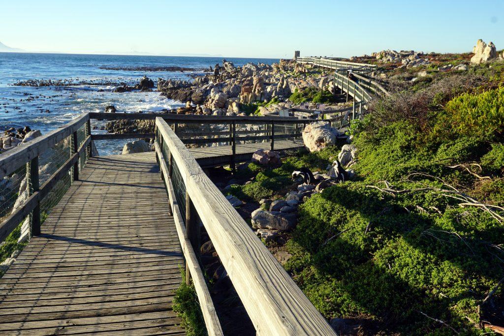 Foto del percorso di osservazione alla Stoney Point Nature Reserve, Sudafrica.