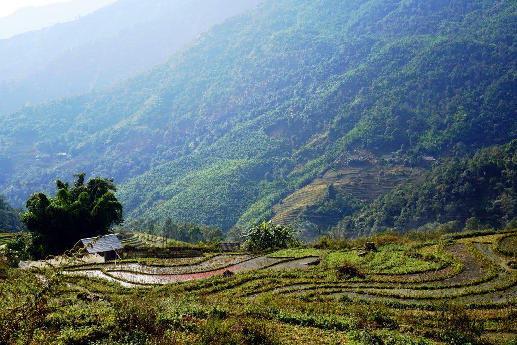 Fotografia delle risaie terrazzate che si vedono durante il trekking a Sapa, Vietnam.