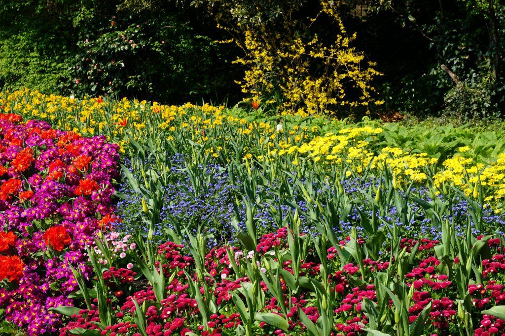 Foto dei coloratissimi fiori di Londra in primavera.